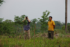 Trees planted for carbon offsets