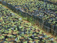 Tree nursery in Ecuador. Click to see a larger version.