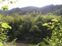 River Ayampe