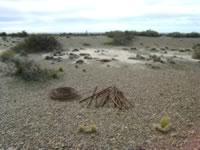 Coastal Steppe at Ranch of Hopes