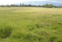 Kinangop Grassland, Kenya