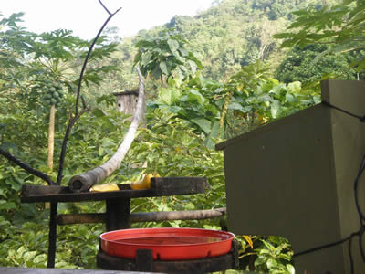 Hummingbird feeder and platform for coatis and other mammals