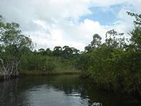 Wetland, Guatemala