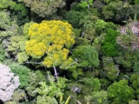 Peruvian forest
