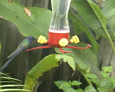New Webcam In The Brazilian Rainforest World Land Trust