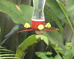 Birdfeeder view of the webcam