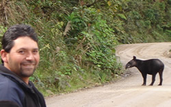 Mountain Tapir in Ecuador