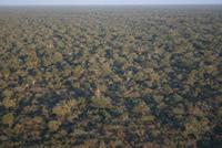 Dry Chaco habitat
