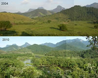 Images showing the reforestation success from 2004 to 2010