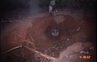 Wild dog and warthog