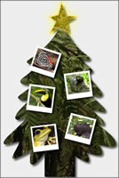 Save Rainforest Christmas Trees