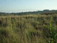 Kinangop Grasslands