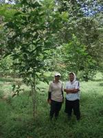 HUTAN reforestation workers