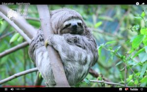 Conservation videos for schools, still from Rainforests