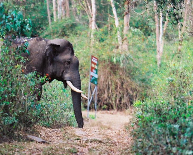 elephant-corridor-india