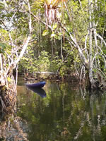Kayak through Lagua Grande Reserve