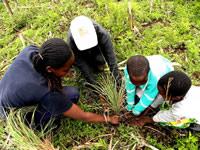 Tussock Grassland replanting