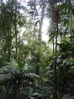 Atlantic Rainforest