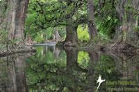 Jalpan River