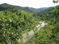 Rainforest habitat in Ecuador