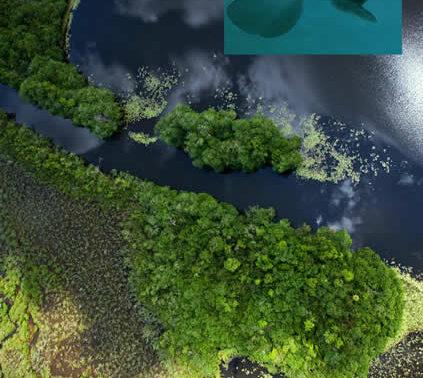 West Indian Manatee in Guatemala lagoon