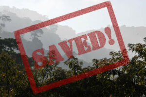 Rainforest saved! Buenaventura Reserve, Ecuador.