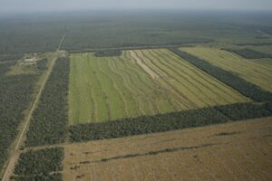 Deforestation in the Chaco-Pantanal, Paraguay