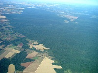 Destruction of Atlantic Rainforest, Paraguay