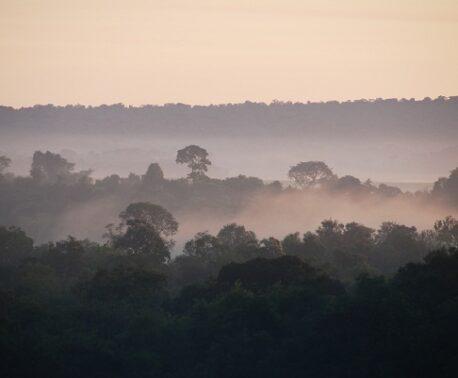 Atlantic Rainforest, Paraguay