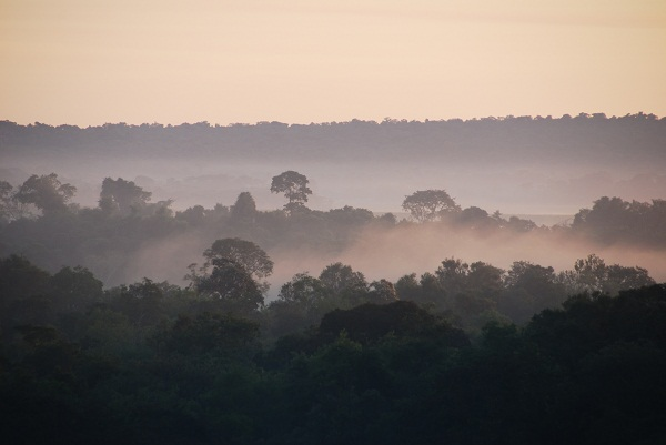 Atlantic Rainforest, Paraguay