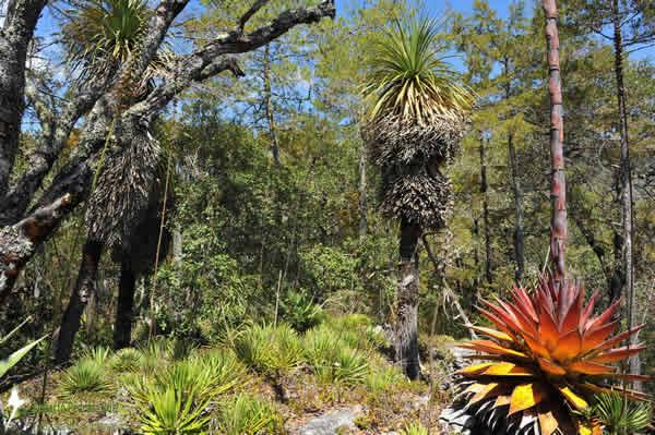 Cerro Prieto-Cerro La Luz Reserve