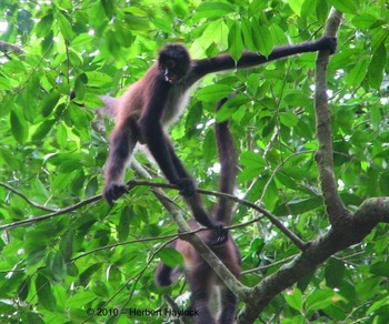 Rainforest protection in Belize: a conservation success