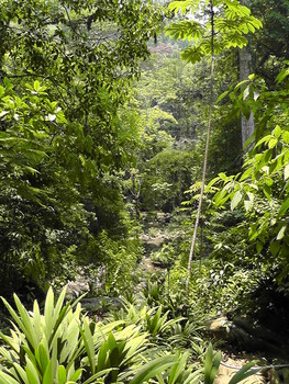 Photograph of rainforest in Guatemala's Cerro San Gil Reserve