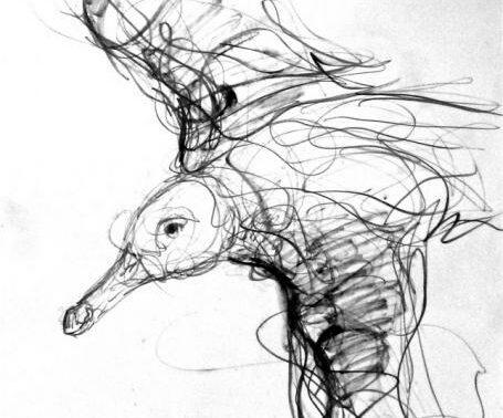 Jason Gathorne Hardy's drawing Herring Gull on the Wing