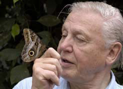 Sir David Attenborough with a butterfly from the programme Life in the Undergrowth.