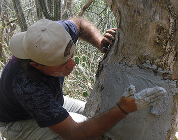 Photograph of Keeper of the Wild, Ranger Pablo Millán, applying plaster to net to repair a damaged nest. © José Manuel Briceño.