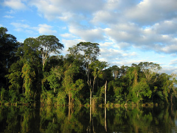 Riverside landscape of Atlantic Forest in Paraguay. © Ilosuna.