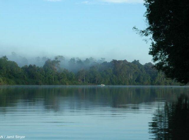 View of Kinabatangan River.