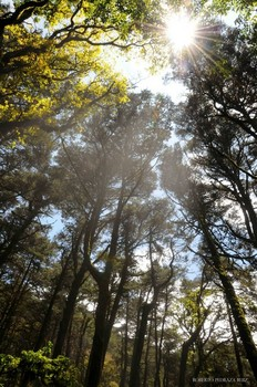 View of sunlight through forest trees in Mexico's Sierra Gorda.