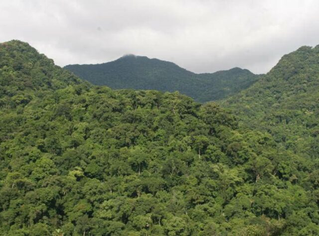 View of mountains covered with forest.