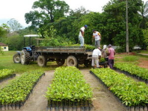 In the tree nursery, rangers load plants on to a flat bed truck.
