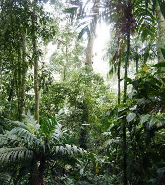 Atlantic rainforest at Guapi Assu.