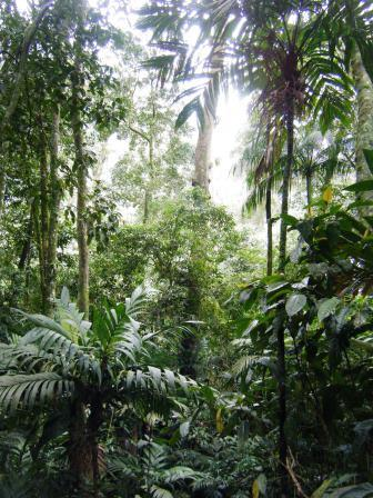 Atlantic rainforest at Guapi Assu.