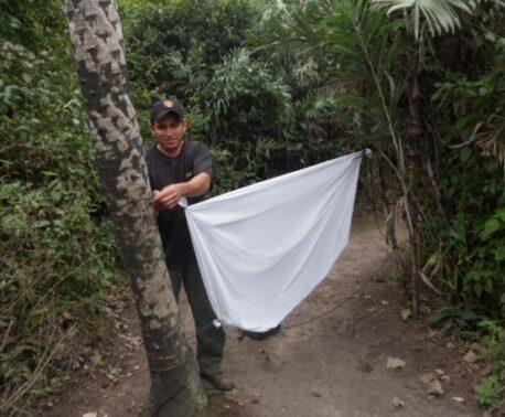 Ranger Edenilson hangs a white sheet between two trees (a moth wall)