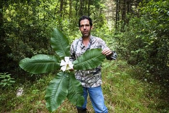 Roberto Pedraza holds up the rzedowskii species of magnolia.