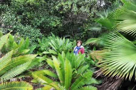 Viv Burton surrounded by cycads in Mexico