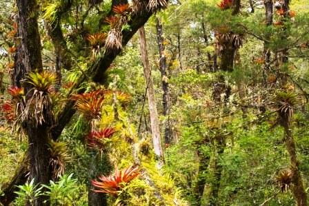 Bromeliads in Cerro Prieto-Cerro de la Luz