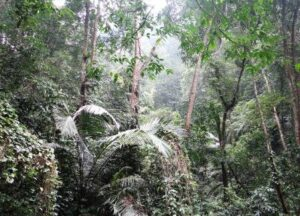Forest landscape of Khe Nuoc Trong. © Viet Nature Conservation Centre (Trung tam Bao ton Thien nhien Viet)