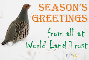 Common Partridge in Caucasus Wildlife Refuge overwritten with the words Season's Greetings from all at World land Trust.
