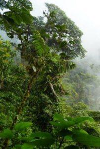 Chocó rainforest. © Fundación ProAves.